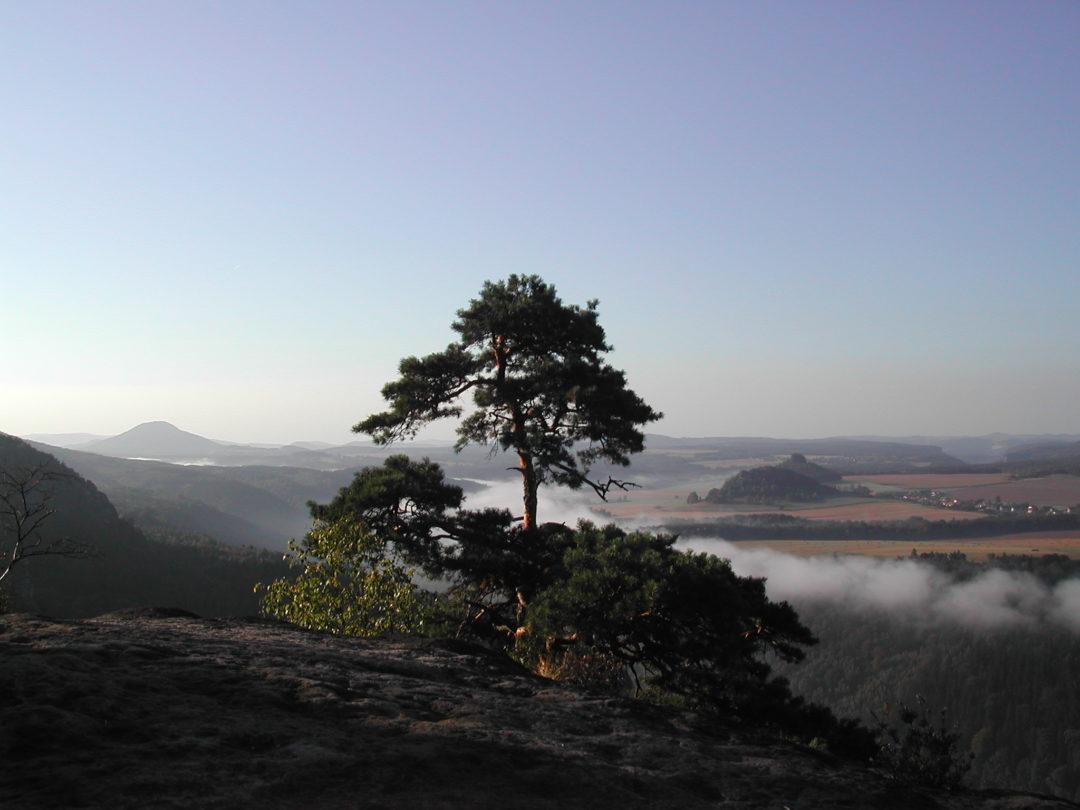 Baum zwischen Himmel und Erde wie Yin und Yang