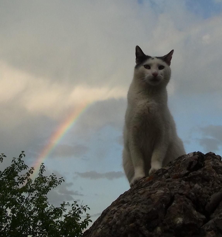entspannte Katze vor Regenbogen