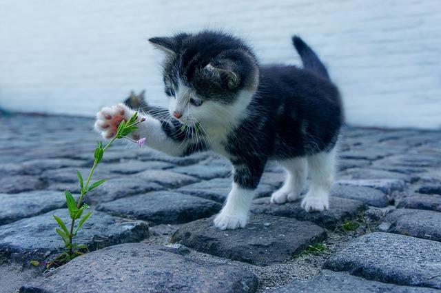 Taiji Katze trainiert das Schultergelenk